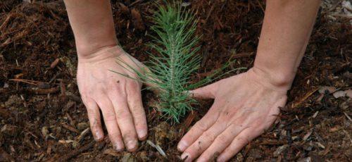 Перед Башкирией поставили задачу полностью восстановить утраченные леса в течение шести лет