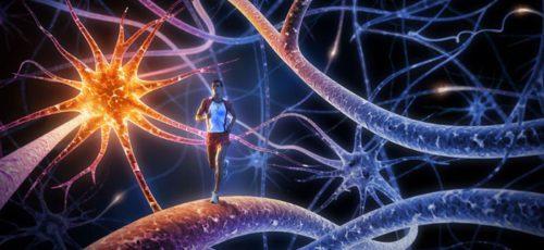 Найден отдел мозга, делающий людей уникальными существами