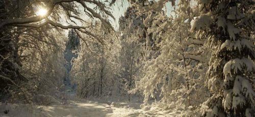 Что предлагает туристам национальный парк «Башкирия» зимой?