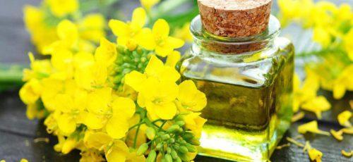 В прошлом году Башкирия впервые экспортировала в Литву рапсовое масло почти на 2,5 млн долларов