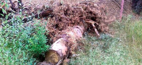 В прошлом году только 5% ущерба лесам Башкирии нарушители оплатили добровольно. Чаще всего они незаконно рубят лес, не соблюдают правила пожарной безопасности и разворачивают деятельность на чужих участках